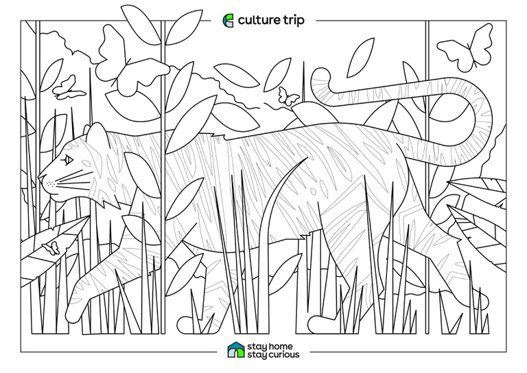 Stay Home - Stay Curious Colouring book-TIGER