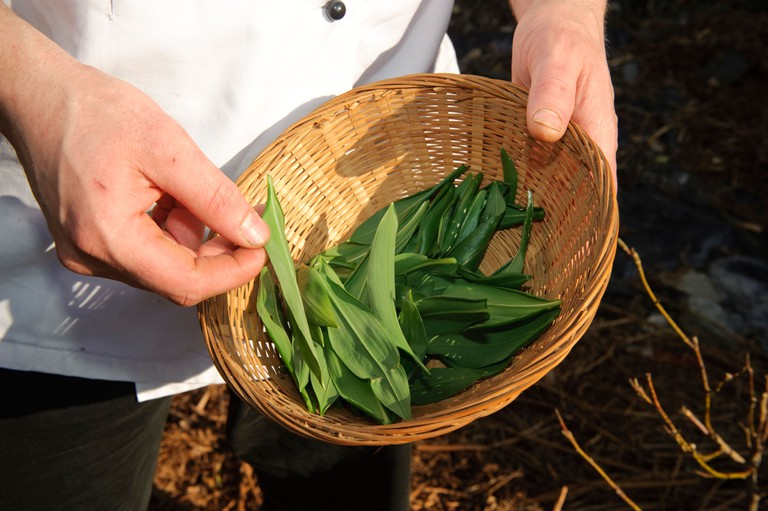 Michelin starred chef at Ynyshir Hall Hotel, collecting locally growing wild garlic for his kitchen.