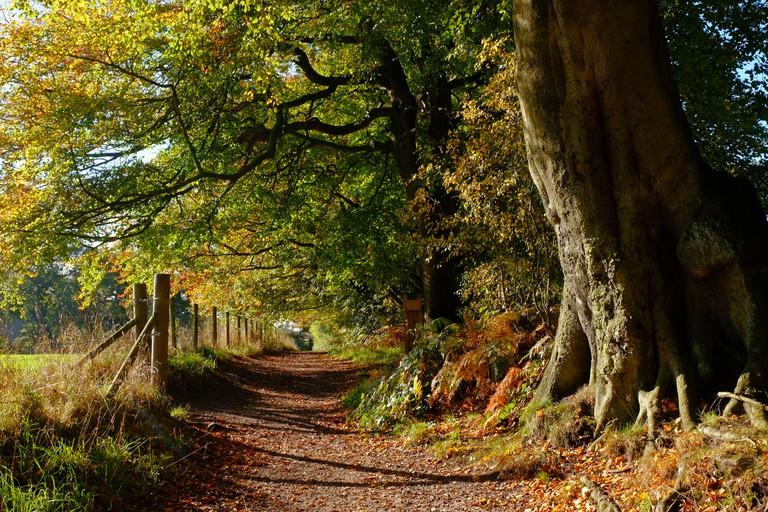England, Cheshire, footpath in Alderley Edge Woods in autumn