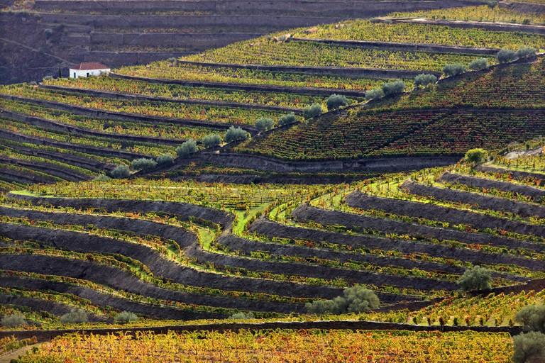 Vineyards in Douro valley in the heart of Alto Douro Wine Region (UNESCO World Heritage, Site), Porto e Norte, Portugal