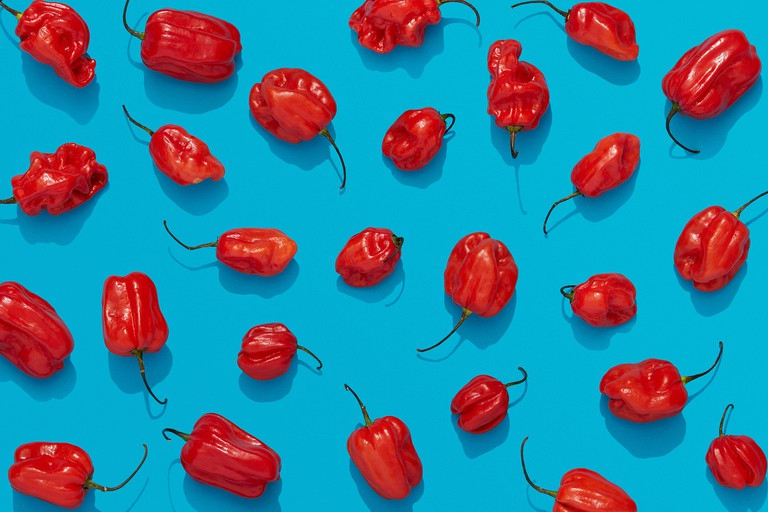 Habanero peppers on blue background, red chili flat lay