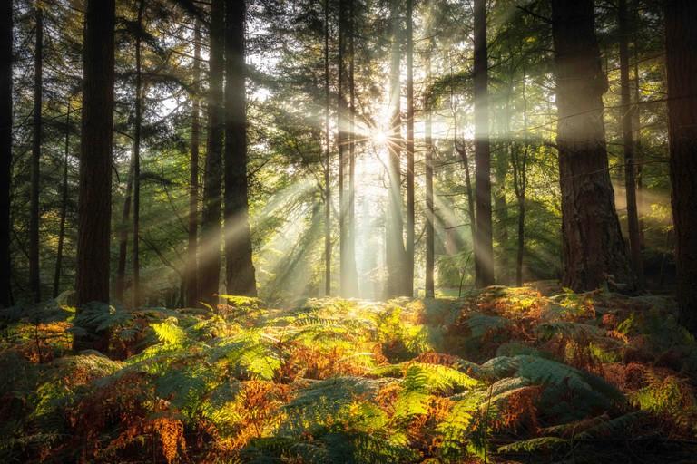 Bolderwood, New Forest National Park, Hampshire, England, UK