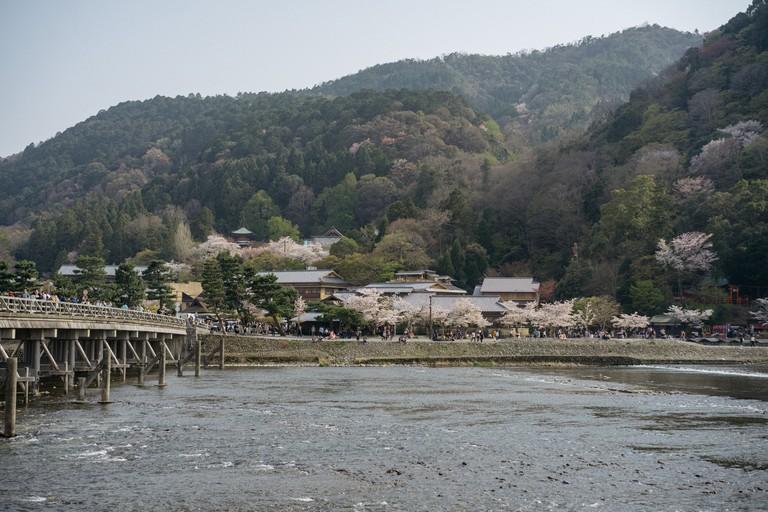 CHERRY BLOSSOM-ARASHIYAMA-KYOTO-JAPAN