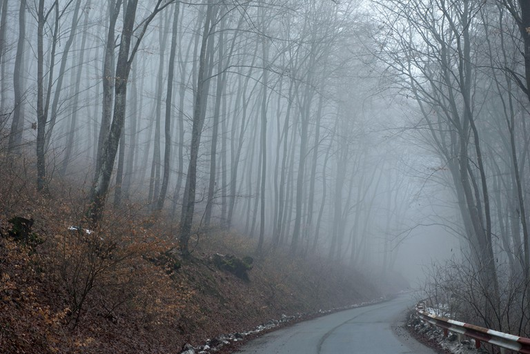 Hoia Baciu wood, Romania is considered the world's most haunted woodlands