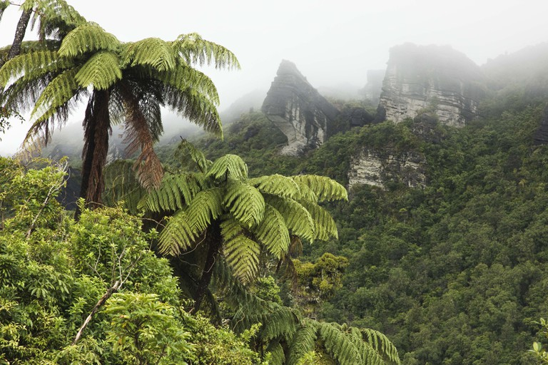 Mountains and fern tree forest, Te Urewera