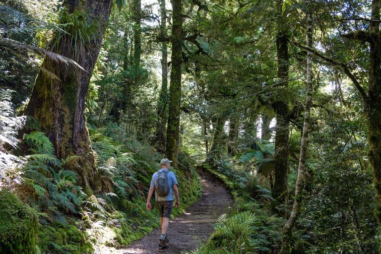 Trail through Primeval forest to Lake Waikareiti to Te Urewera