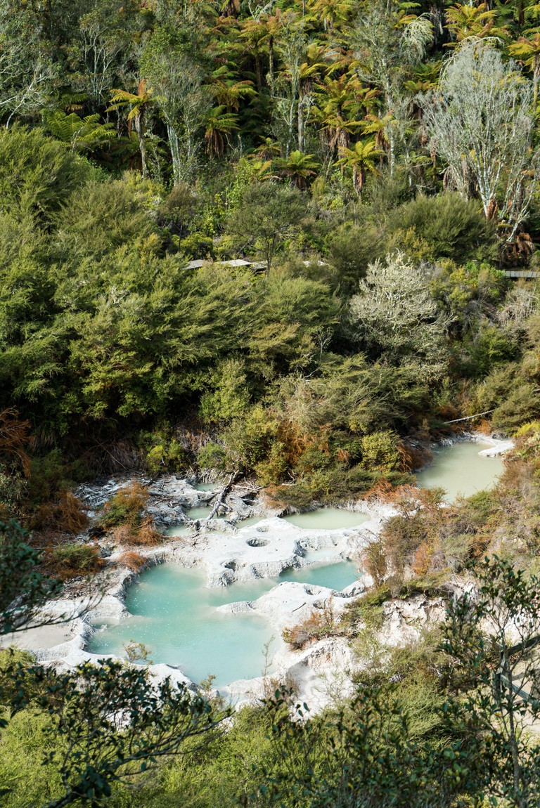 Hot thermal pools at Orakei Koraki Geothermal Park