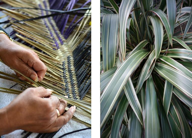 Left: Maori woman weaving a traditional Maori woven artwork | Right: New Zealand flax plant