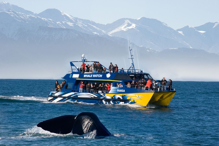 A whale dives in front of Whale watchers in Kaikoura