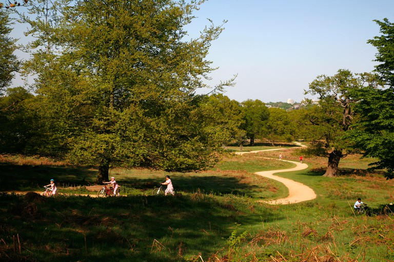 Cycling along the Tamsin Trail up Broomfield Hill, Richmond Park, London.