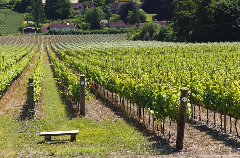 Hampshire vineyard