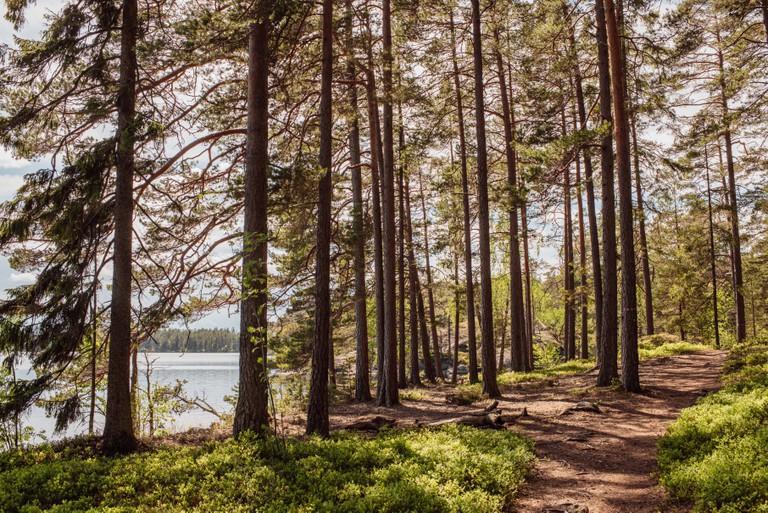 Forest in Tiveden Sweden