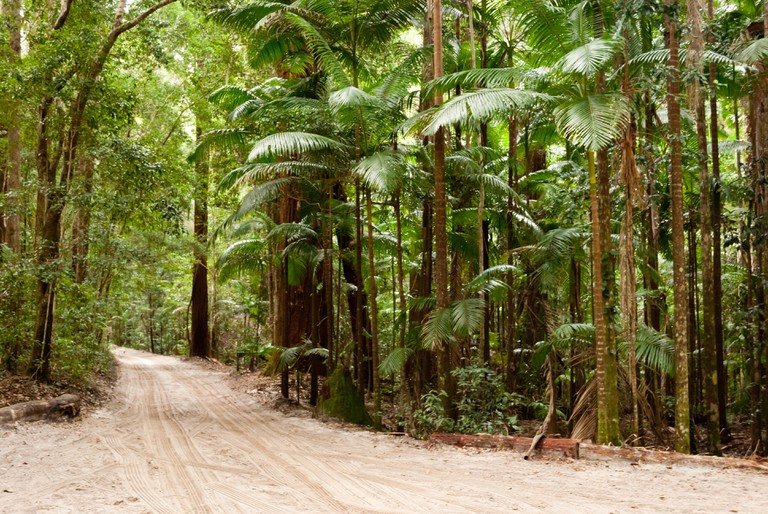 Forest on the sand, Fraser Island, Australia