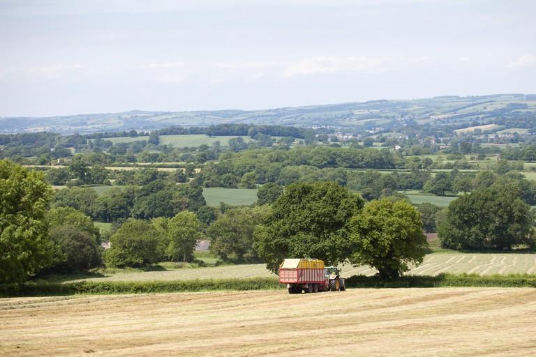 Blackdown Hills, East Devon