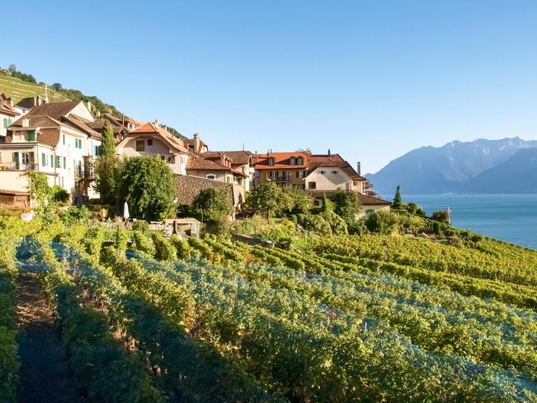 Landscape of Lavaux Vineyard