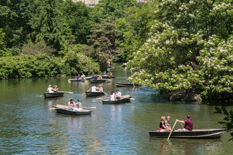 Row boats on the lake in Central Park