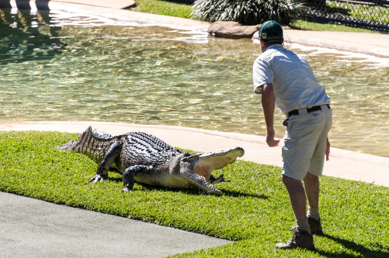 A zoo keeper feeding fish to a Saltwater crocodile in front of a large audience in the Crocseum at the Australia Zoo on the Sunshine Coast in Queensla