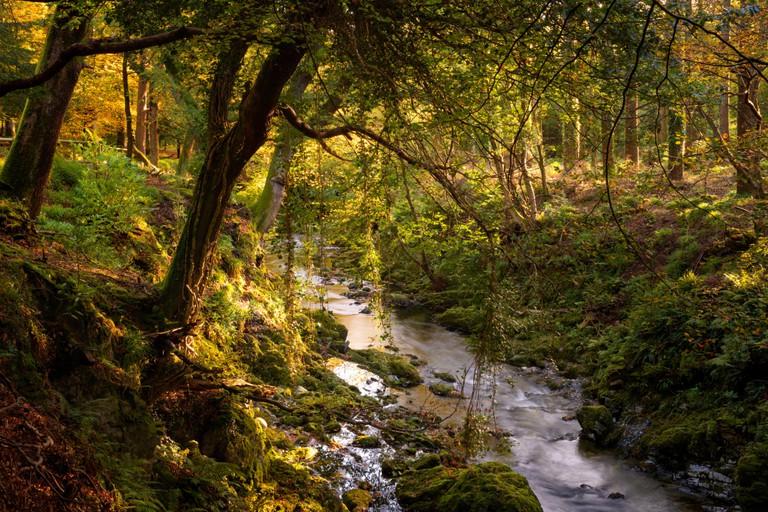 Tollymore Forest Park in Bryansford Northern Ireland