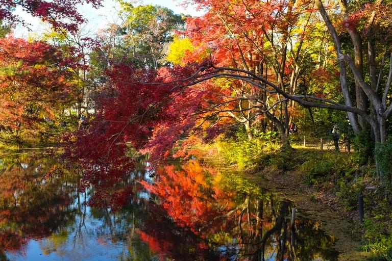 Kyoto Botanical Gardens in Kyoto, Japan.