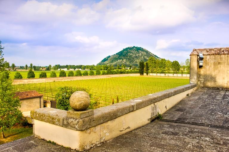 euganean hills praglia wineyard - Padua - Veneto - Italy