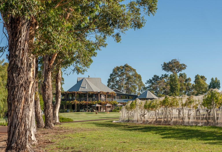 Homestead and vineyard of Vasse Felix, the oldest winery in the Margaret River region, Cowaramup, Western Australia