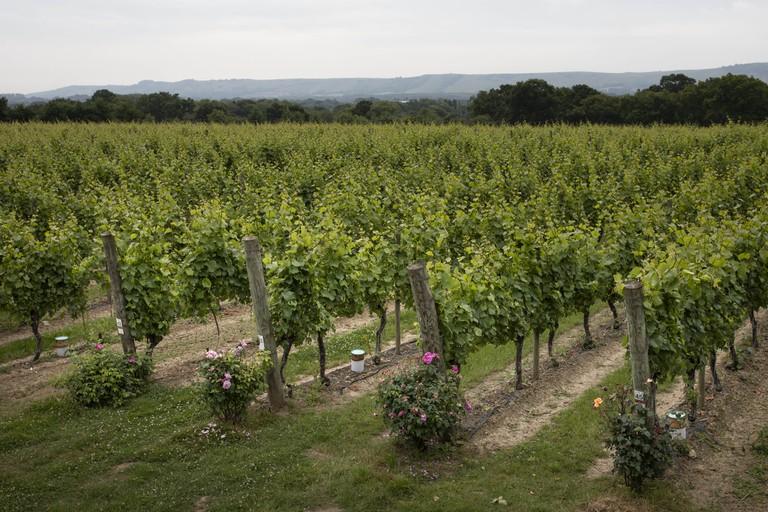 Ridgeview Wine Estate The Only British Vineyard To Make Top 50 World's Best