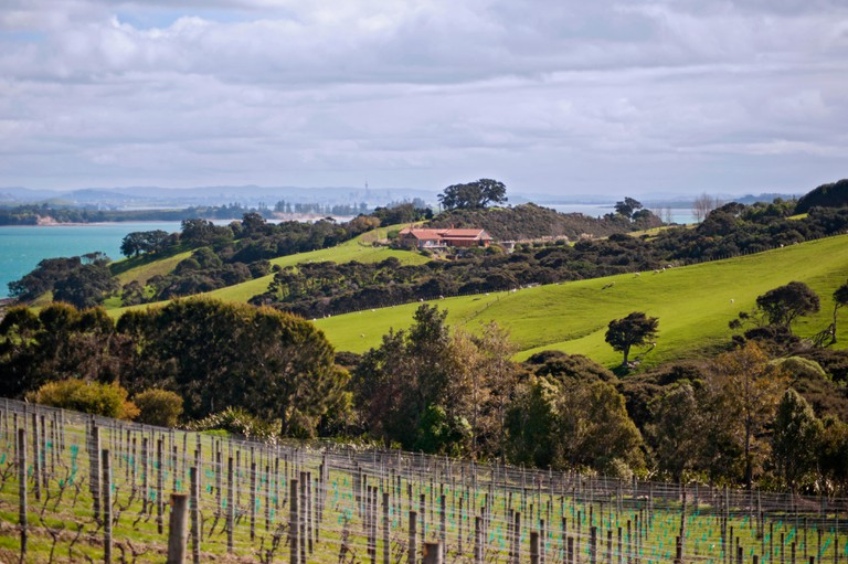 Cable Bay Vineyards; Waiheke Island, New Zealand