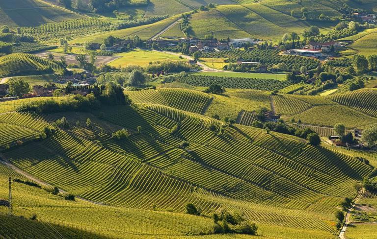 Langhe vineyards and hills, Piedmont, Italy