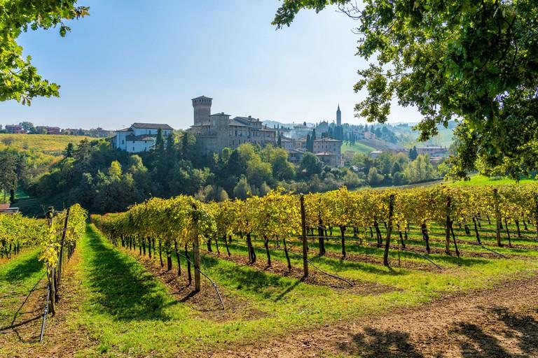 Levizzano Rangone vineyards, Province of Modena, Emilia Romagna, Italy