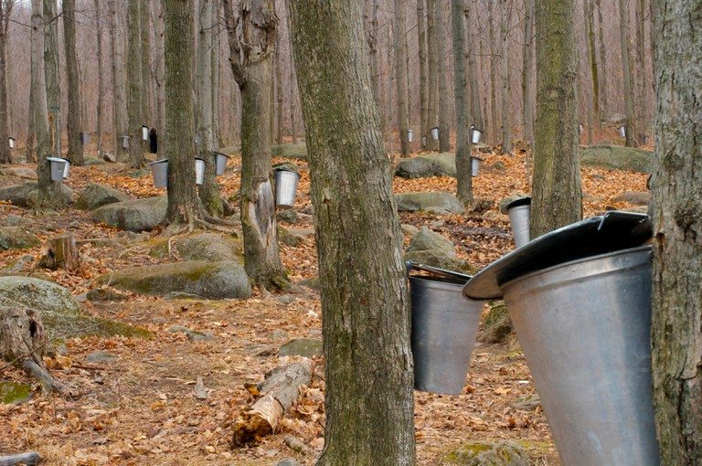 The Maple Syrup Farms Cabanes a sucre of Quebec during Autumn collecting our favourite pancake and waffle toppings