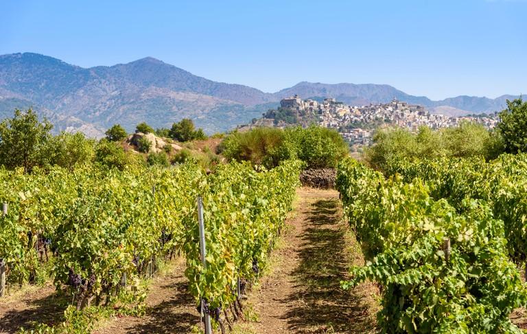 Mount Etna Vineyard, Sicily