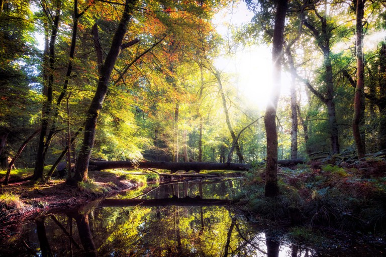 Blackwater, New Forest, Hampshire, England