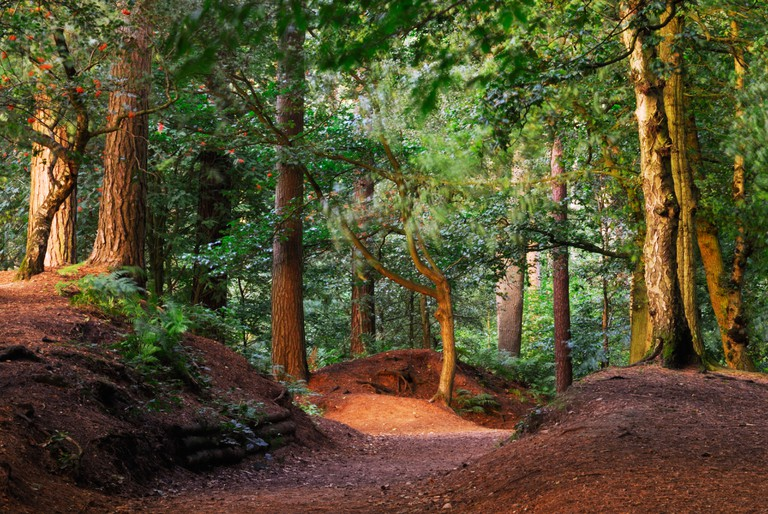 Delamere Forest Cheshire England UK. Image shot 2012. Exact date unknown.