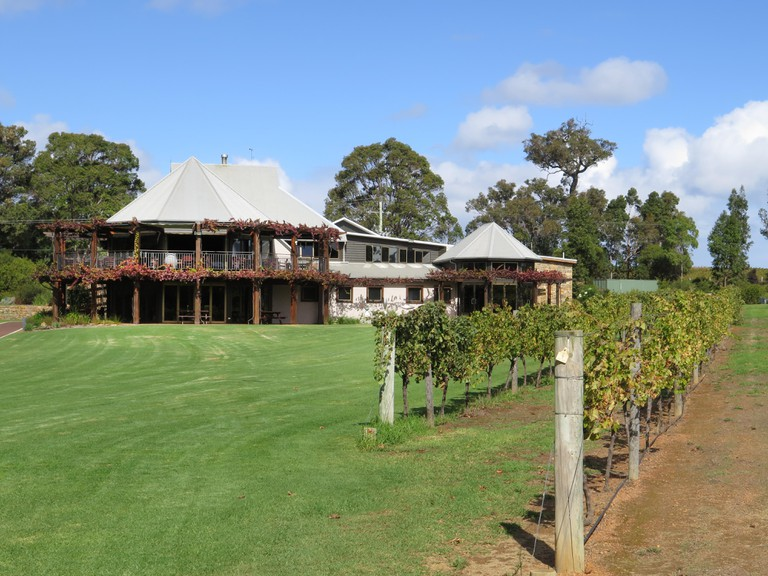 Cabernet Sauvignon vines at the Vasse Felix winery in the Margaret River area of Western Australia. Oldest vines in WA