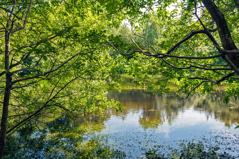 Pond at Epping Forest, Essex, UK