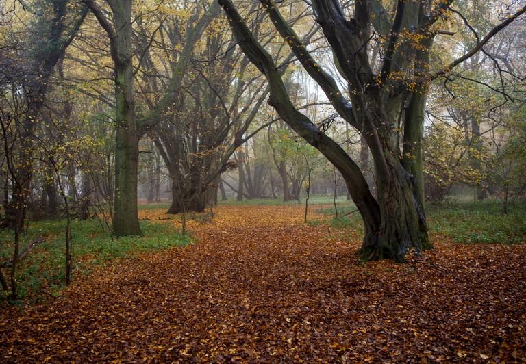 Autumn trees, Emblems Coppice, Hatfield Forest, Essex