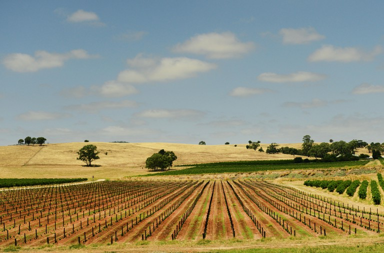Beautiful landscapes at the Barossa valley in South Australia.