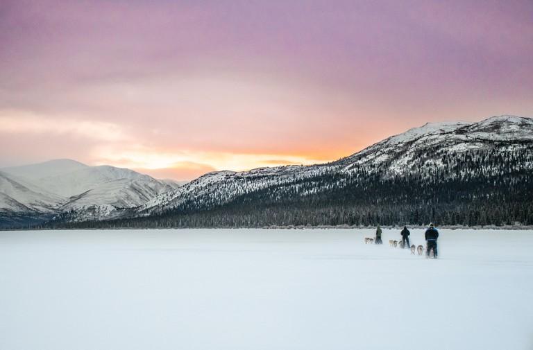 Drive your own husky-powered sled through Yukon's snowy terrain