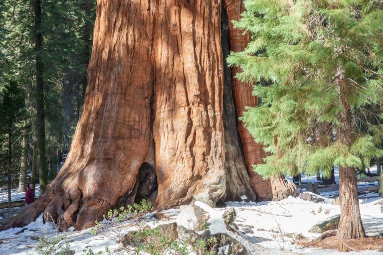 General Sherman at Sequoia National Park, California, USA