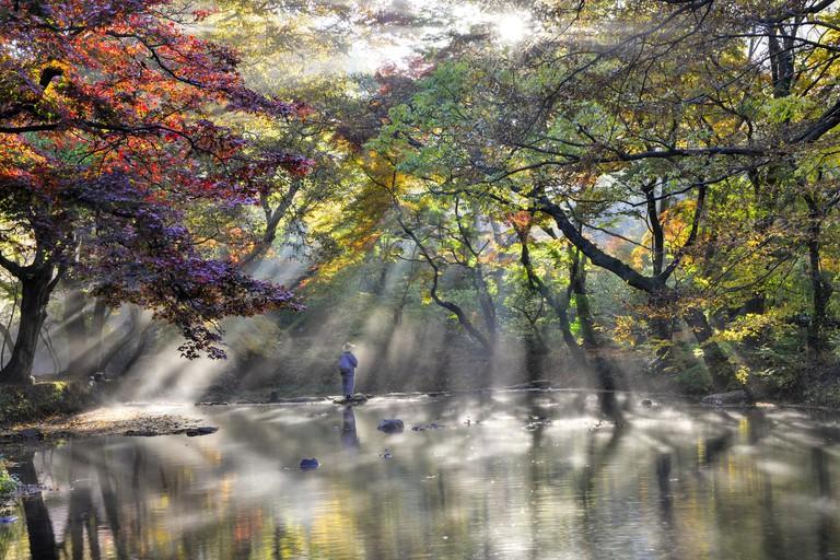 Into the Fall (Korea Tourism Organization - Kim Dong-seon)