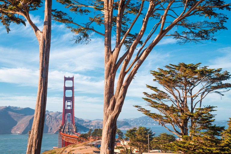 Famous Golden Gate Bridge framed by old cypress trees at Presidio Park on a beautiful sunny day with blue sky and clouds, San Francisco, California