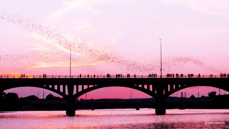 Congress Bridge Bats, Austin