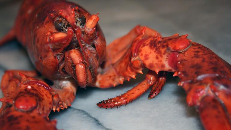 A lobster dish