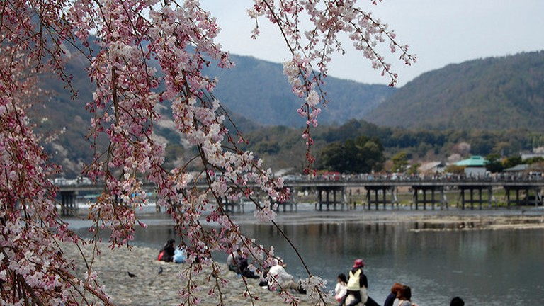 The Cherry Blosson in spring time at Togetsukyo Bridge