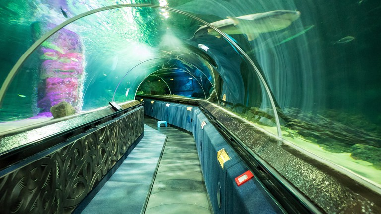 Shark Tunnel at Kelly Tarlton's Sea Life Aquarium