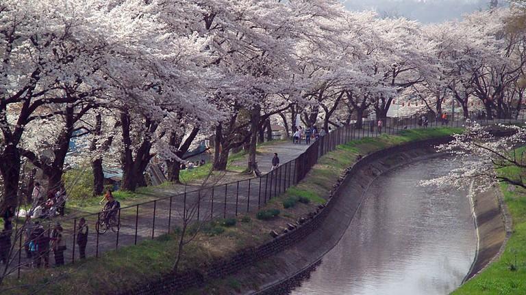 Sakura along the Tama River | © Fg2 / WikiCommons