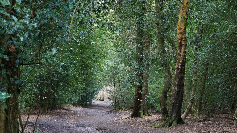 Trees at Sutton Park