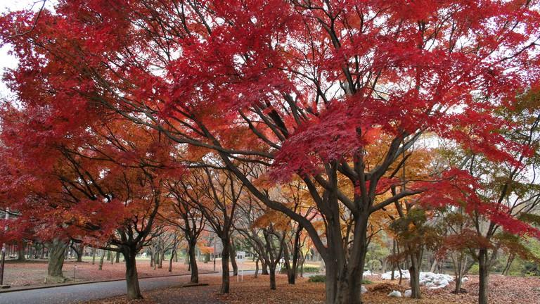 Yoyogi Park during fall