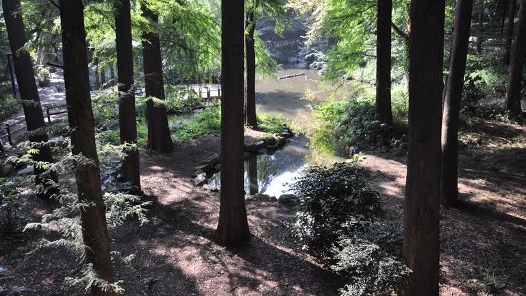 Rinshi-no-Mori Park in Shinagawa