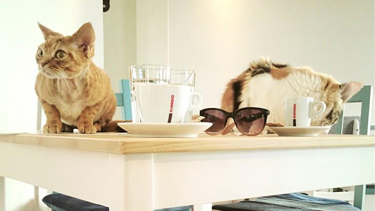 Cat Caffe